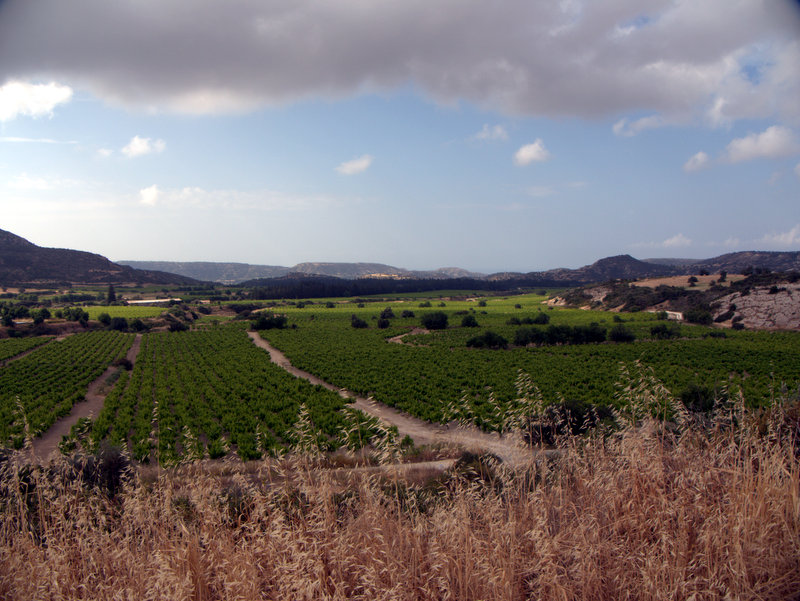 Vineyards beside the track, Alekhtora to Khapotami Gorge, Walking Cyprus.  Alekhtora Khapotami Gorge Kato Arkhimandrita 2010-04-30