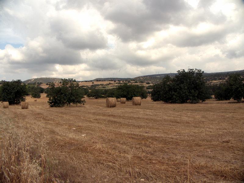Round straw bales, Alekhtora to Khapotami Gorge, Walking Cyprus.  Alekhtora Khapotami Gorge Kato Arkhimandrita 2010-04-30