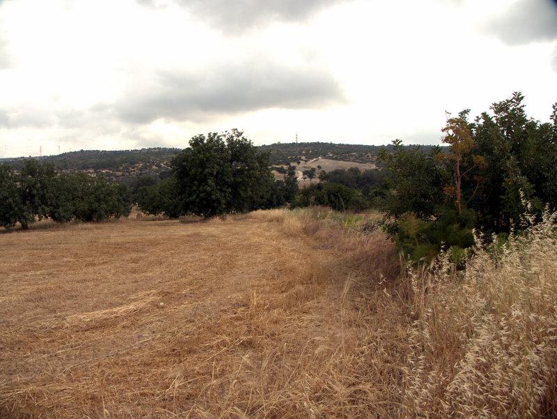 Stubble fields, Alekhtora to Khapotami Gorge, Walking Cyprus.  Alekhtora Khapotami Gorge Kato Arkhimandrita 2010-04-30