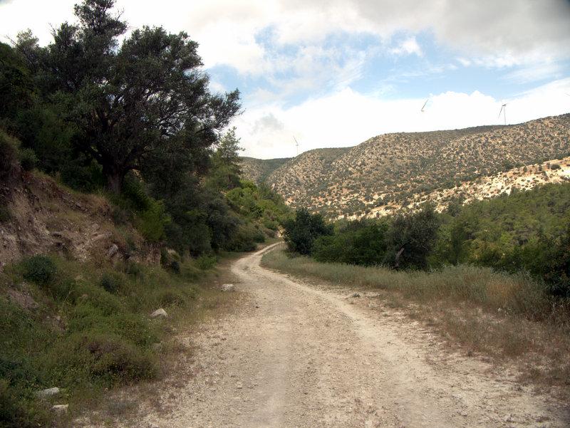 The track out of the gorge, Flowers in the Khapotami Gorge, Walking Cyprus.  Alekhtora Khapotami Gorge Kato Arkhimandrita 2010-04-30