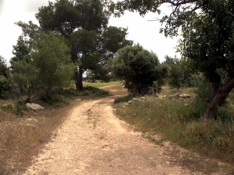 Track Kato Archimandrita to Alekhtora , walking Cyprus  Alekhtora Khapotami Gorge Kato Arkhimandrita 2010-04-30
