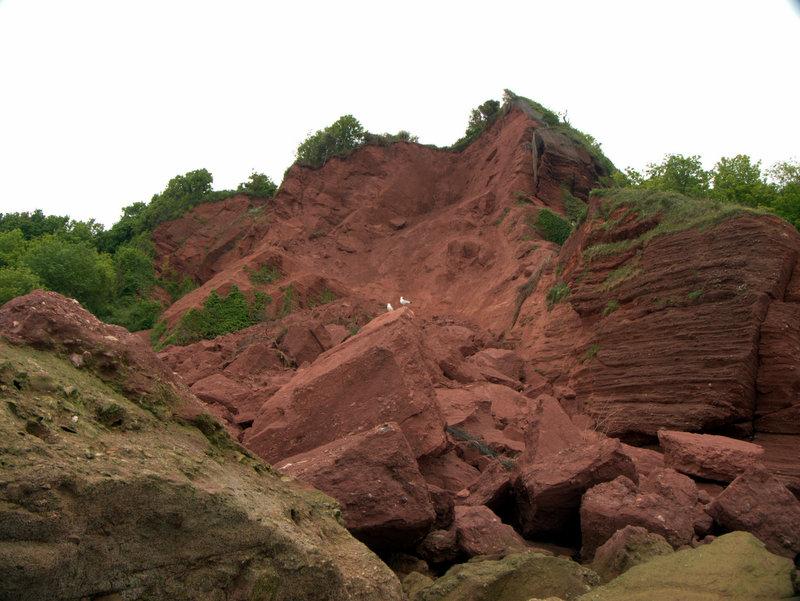 Unstable cliffs and massive rock fall at Oddicombe Beach  Torbay Oddicombe Hopes Nose 2010-05-31
