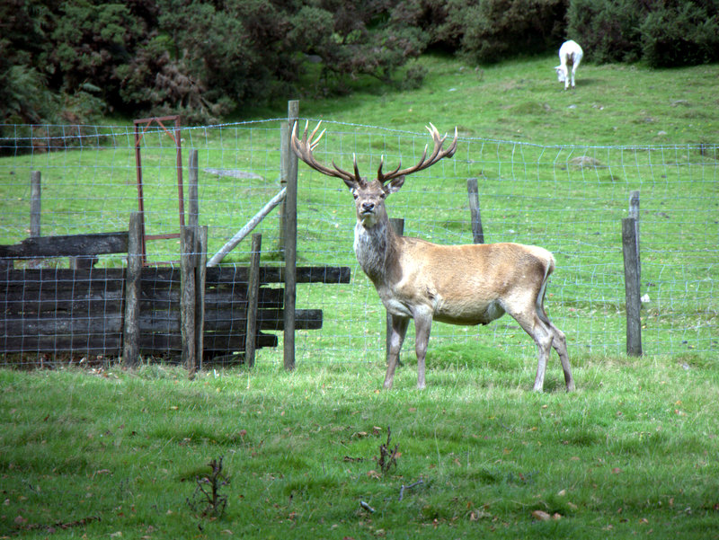 Venford Reservoir Michelcombe Scoriton Deer Farm Holne Moor Dartmoor 2010-09-07 Venford Reservoir Michelcombe Scoriton Deer Farm Holne Moor Dartmoor 2010-09-07