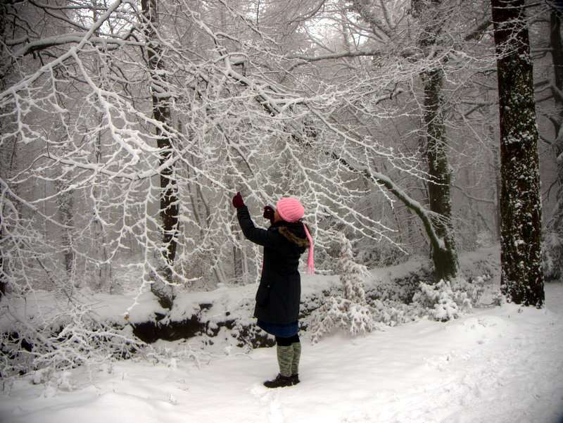 Young woman entranced by the snow on the branches. Snow on Mamhead- Haldon Hill Snow holds a fascination for this young woman. I'm glad she decided to wear the pink hat and scarf. A winter wonderland as snow outlines every branch in the forest