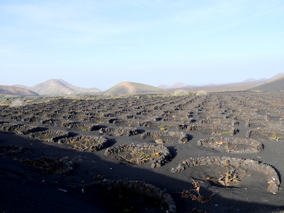 Grapevines growing in pits dug in the volcanic gravel that covers the soil. The walls provide some protection from the wind and rain washing the gravel back into the holes.