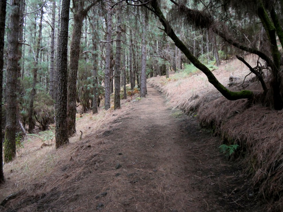 The path is sheltered in the forest at the start